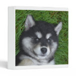 Adorable Alusky Puppy Dog 3 Ring Binder