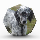 Adorable Black and White English Setter Acrylic Award