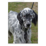 Adorable Black and White English Setter Card