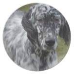 Adorable Black and White English Setter Dinner Plate