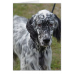 Adorable Black and White English Setter Dog Card