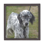 Adorable Black and White English Setter Keepsake Box