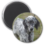Adorable Black and White English Setter Magnet