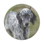 Adorable Black and White English Setter Paper Plate