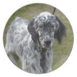 Adorable Black and White English Setter Plate