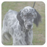 Adorable Black and White English Setter Square Paper Coaster
