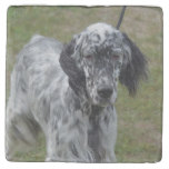 Adorable Black and White English Setter Stone Coaster
