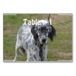 Adorable Black and White English Setter Table Number