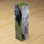 Adorable Black and White English Setter Wine Gift Box