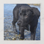 Adorable Black Lab Puppy Dog Invitation