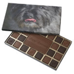 Adorable Cairn Terrier 45 Piece Box Of Chocolates