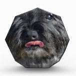 Adorable Cairn Terrier Acrylic Award