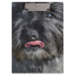 Adorable Cairn Terrier Clipboard