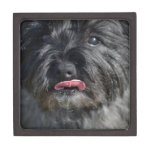 Adorable Cairn Terrier Gift Box