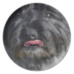 Adorable Cairn Terrier Plate