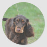 Adorable Cocker Spaniel Classic Round Sticker