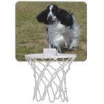 Adorable English Cocker Spaniel Mini Basketball Backboard