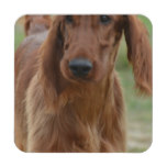 Adorable Irish Setter Beverage Coaster