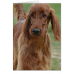 Adorable Irish Setter Card