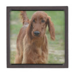 Adorable Irish Setter Jewelry Box