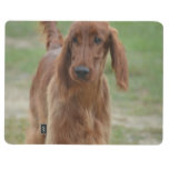 Adorable Irish Setter Journal