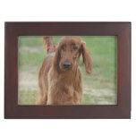 Adorable Irish Setter Keepsake Box