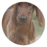 Adorable Irish Setter Melamine Plate