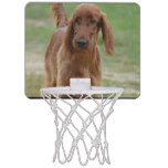 Adorable Irish Setter Mini Basketball Hoop