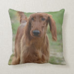 Adorable Irish Setter Throw Pillow
