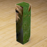 Adorable Nova Scotia Duck Tolling Retriever Puppy Wine Box