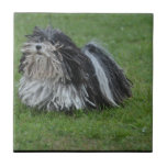 Adorable Puli Dog Ceramic Tile