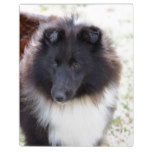 Adorable Sheltie Plaque