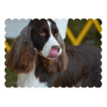 Adorable Springer Spanial Card