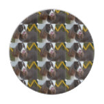 Adorable Springer Spanial Paper Plate