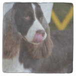 Adorable Springer Spanial Stone Coaster