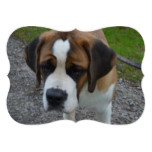 Adorable St Bernard Card