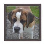 Adorable St Bernard Gift Box