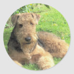 Airedale Terrier Sticker