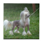 Alert Chinese Crested Dog Ceramic Tile