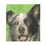 Australian Cattle Dog Notepad