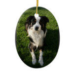 Australian Shepherd Photo  Ornament
