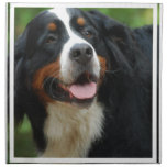 Baby Bernese Mountain Dog Napkin