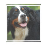 Baby Bernese Mountain Dog Notepad