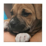 Baby Boxer Tile