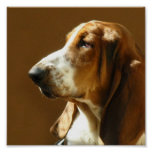 Basset Hound Photo Print