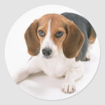 Beagle Dog Stickers
