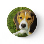 Beagle Round Button