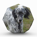 Beautiful English Setter Dog Acrylic Award