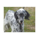 Beautiful English Setter Dog Canvas Print