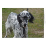 Beautiful English Setter Dog Card